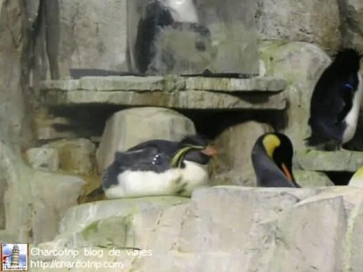 pinguinos-biodome2