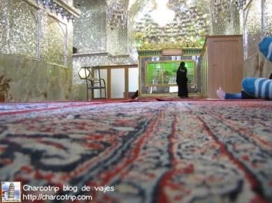 shiraz Imamzadeh alfombra