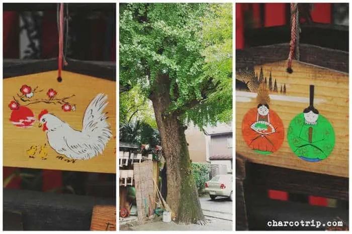 El árbol de mas de 700 años