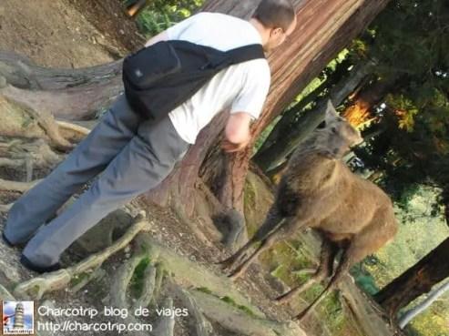 vicente-con-ciervo