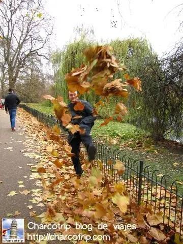 vicente-hojas-st-james-park