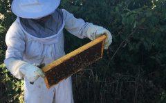 Hobby, Adoption Keeping English Teacher Busy As A Bee