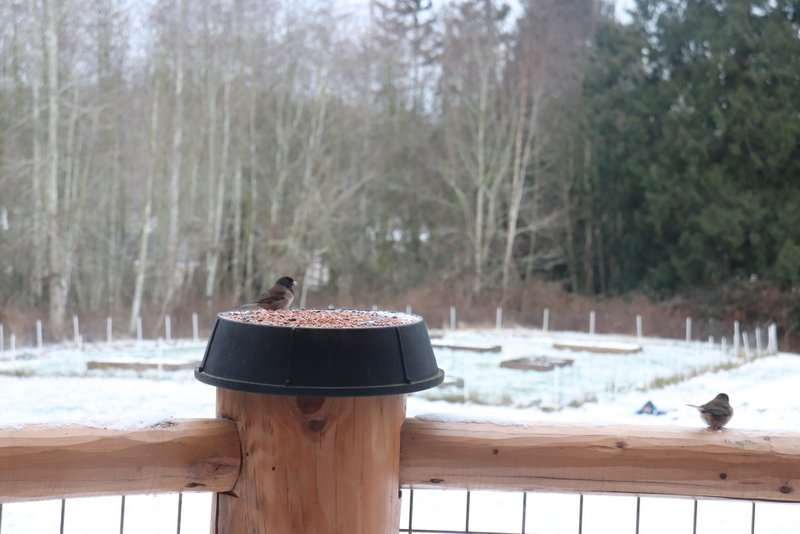 Why Bird Seed Could Be A First Step Towards Healing