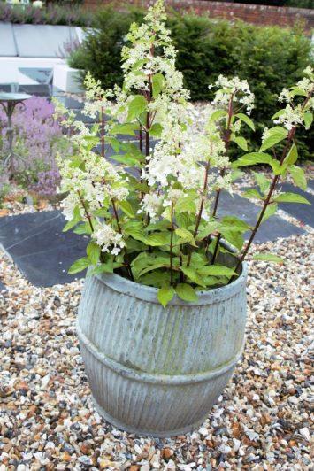 recycled washing tub planter. Karen Kennedy of Indigo Rye's garden for Charis White blog