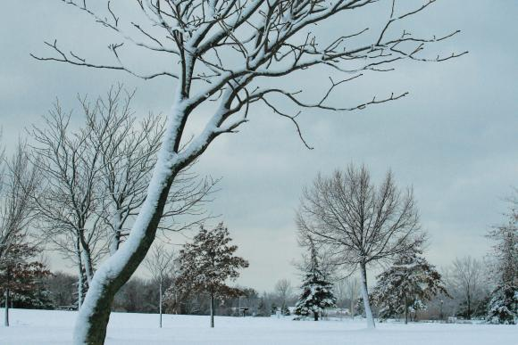 christmas-greeting-card-bent-tree-by-michael-toole