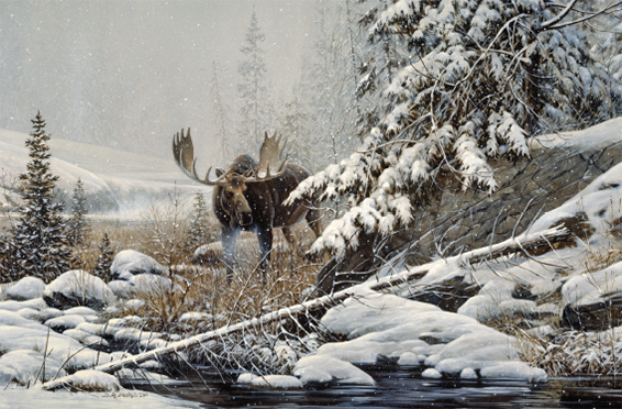 christmas-greeting-card-moose-by-dr-laird.jpg