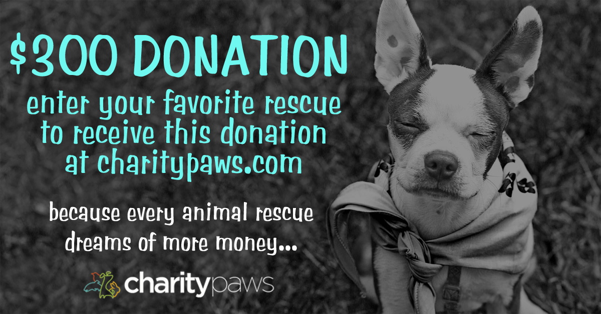 300 Donation For One Animal Rescue In Need