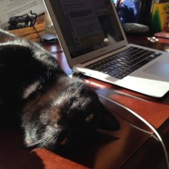 cat desk my word of the week confidence