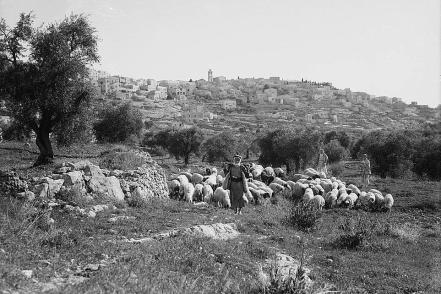 Bethlehem with shepherd and flocks in foreground.