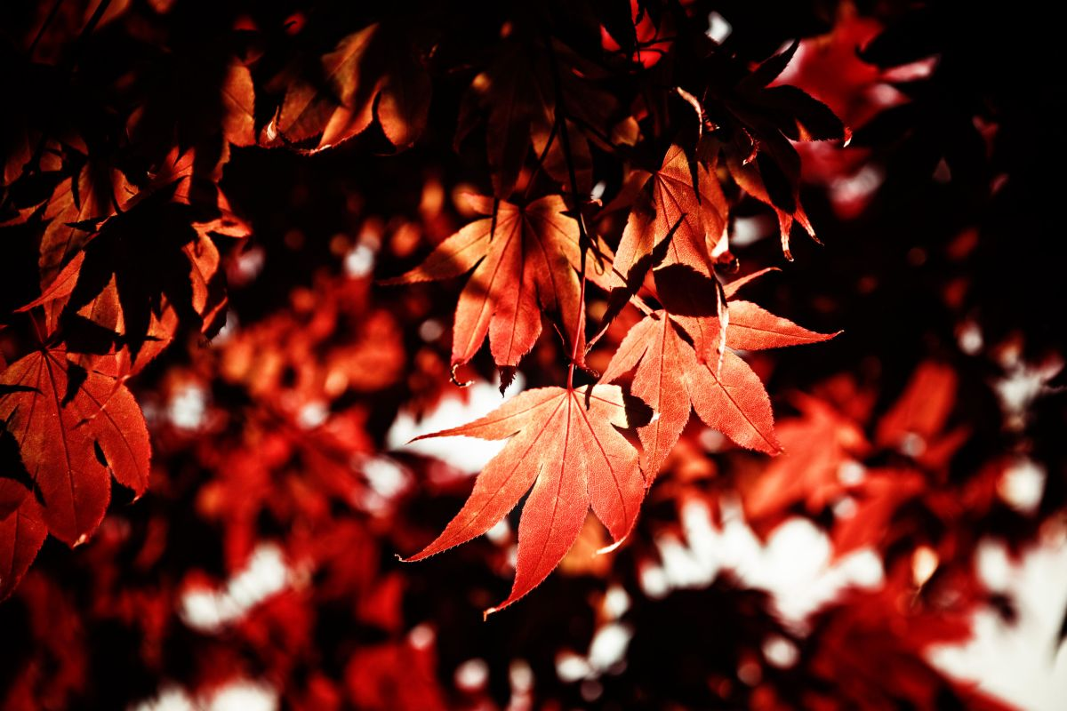 Crimson Thanksgiving