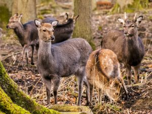 forestier-gibier-chasse