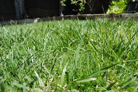 grass-closeup.jpg