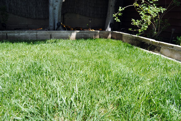 pennington-one-step-grass-after.jpg