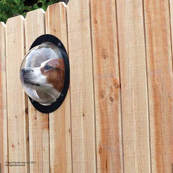 pet-peek-fence-window.jpg