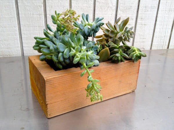 succulents-block
