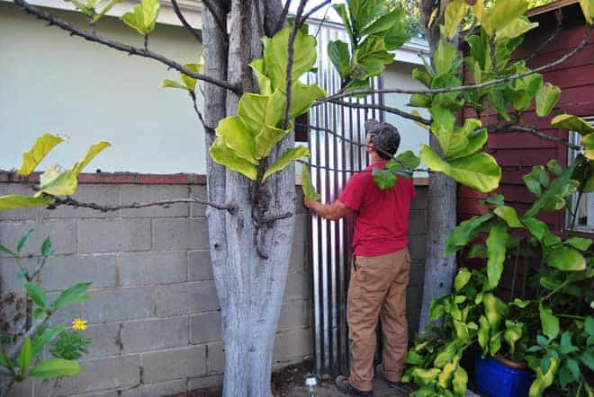 privacy-fence-install
