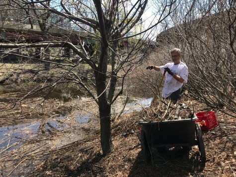 Herb Nolan with branches skimmed from the Muddy River