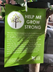 New Tree Sign from Boston Parks and Recreation