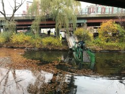 Cleaning up Muddy River November 19th and 20th