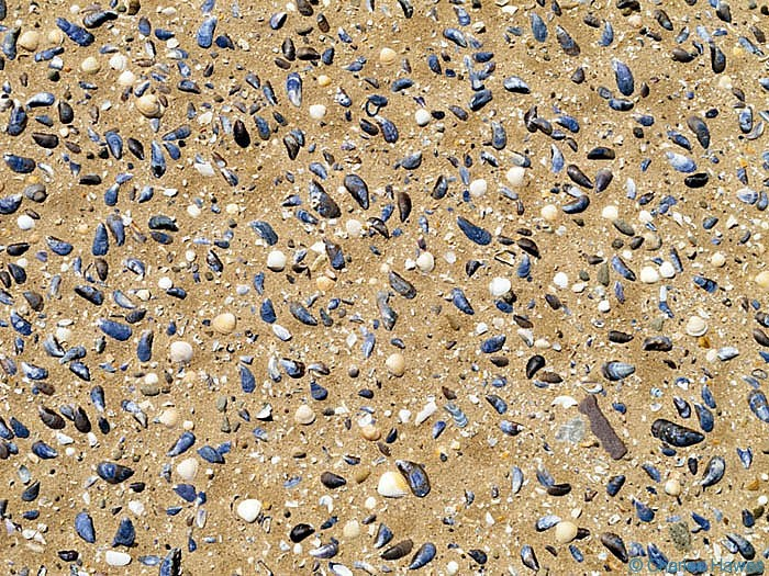Seashells on Whitemore Nature Reserve beach taken from The Wales Coast path between Rhossili and Llanrhidian, photographed by Charles Hawes. Walking in Wales