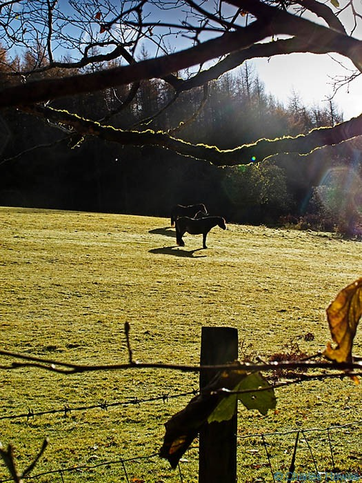 sun bathing horses near the River Mellte in Powys, Wales, photographed by Charles hawes. walking in wales.