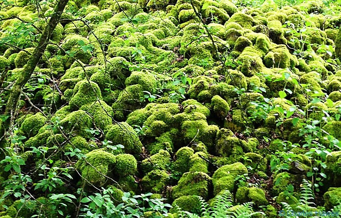 Moss covered stony bank on The Dent Road on The Dales Way, photogrphed by Charles Hawes