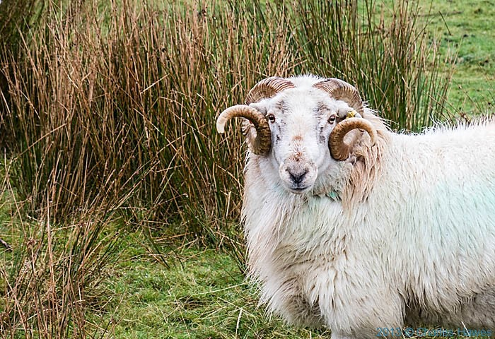 Two sheep pics in one day! God, I'm good to you. But then..... We, like sheep, .....