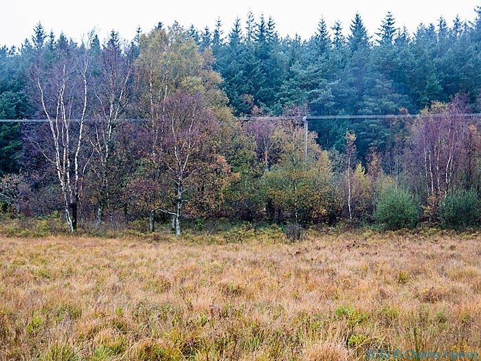 Conifer plantation at edge of moor above natmor, Snowdonia, photographed by Charles Hawes