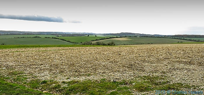 Open field at the edge of Grovely Wood, Wiltshire, photographed by Charles Hawes