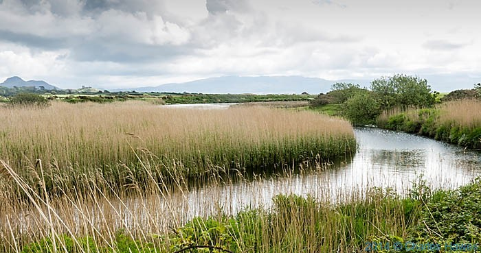 Reed lined banks of the Afon Dwyfor, Lleln penisula, photographed by Charles Hawes