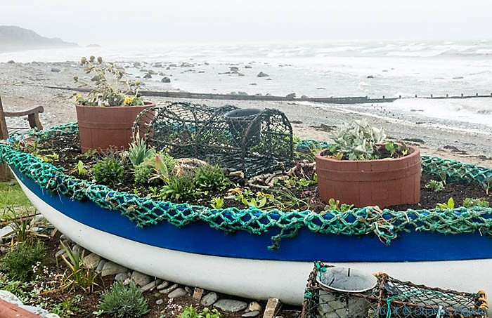 Planted up boat on the promenade at Criccieth, photographed from The Wales Coast path by Charles Hawes