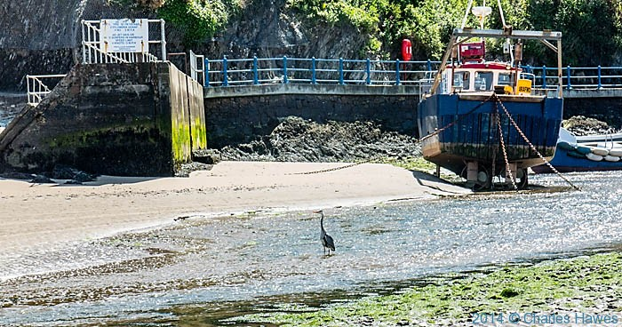 Heron in the River Soch at Abersoch, photographed by Charles Hawes
