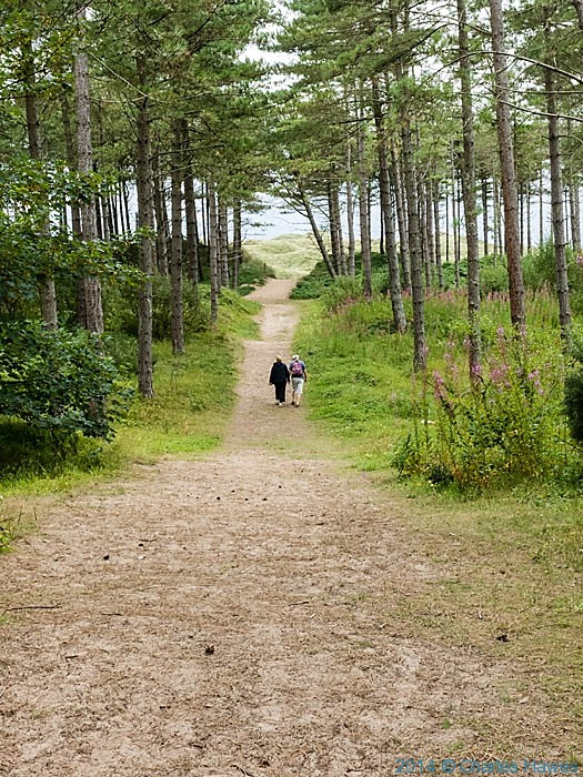Newborough Forest, Anglesey, photographed from The Wales Coast Path by Charles Hawes