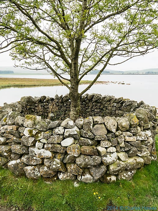 Walled surround to trees in Malham Tarn Field Studies Centre, photographed by Charles Hawes