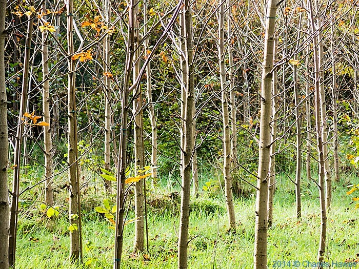 Trenley Park Wood, The Stour Way, Canterbury, photographed by Charles Hawes