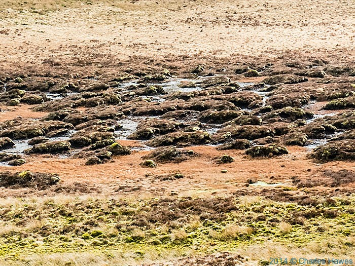 Boggy ground below Foel Uchaf, Powys, photographed by Charles Hawes