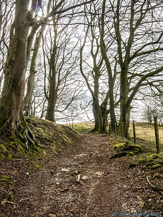 Track in The Warren wood Caerphilly leading to the Rhymney Valley Ridgeway Walk, photographed by Charles Hawes