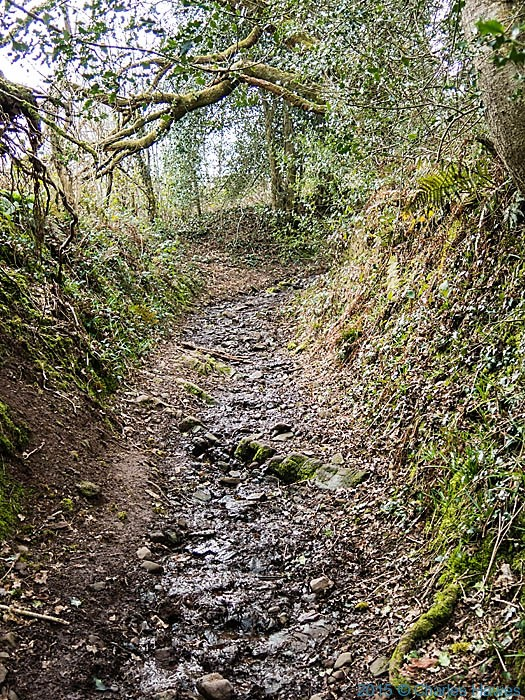 Sunken path above Llanishen Golf Couse on the North Cardiff Craigs Walk, photographed by Charles Hawes