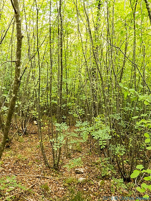 Coppice near Badia a Passignano, Tuscany, photographed by Charles Hawes