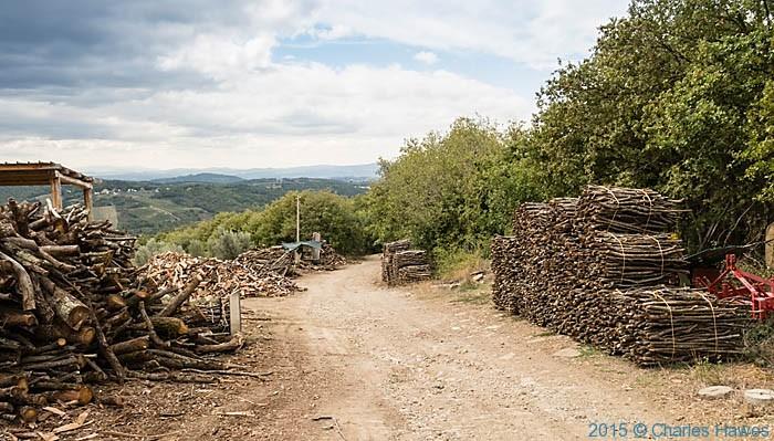 Woodyard at Poggio al Vento near Badia a Passignano, Tuscany, photographed by Charles Hawes