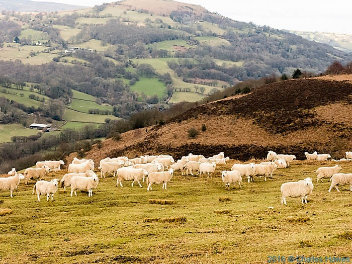 Lower slopes of Sugar Loaf, photographed from The Cambrian Way by Charles Hawes