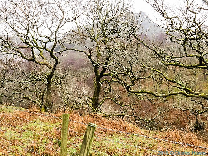 Woodland in the Doethie valley photographed from the Cambrian Way by Charles Hawes
