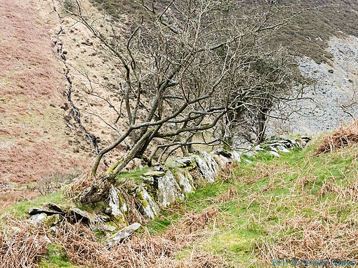 Cambrain Way in the valley of Nant Egnant, photographed by Charles Hawes