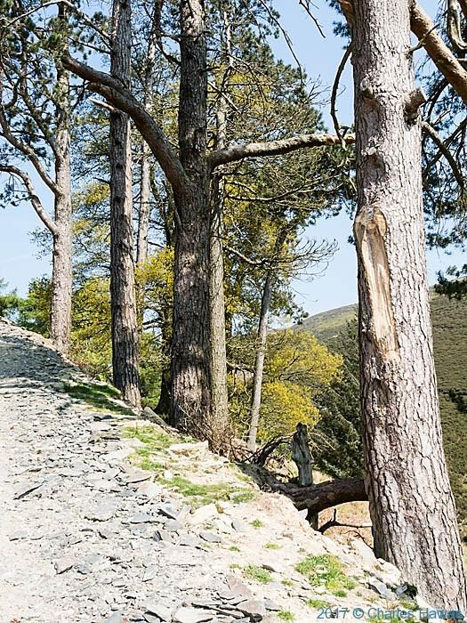 Track near Swch-cae-rhiw, photographed by Charles Hawes