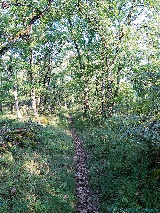 Path through Peche de Lebre wood near Vaour, photographed by Charles Hawes