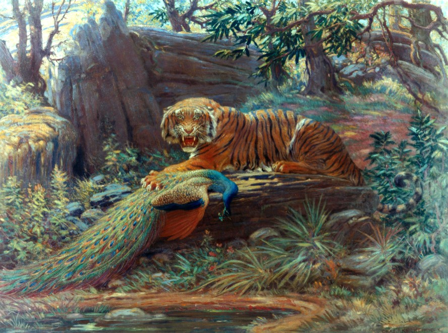 Hunters holding Manchurian Tiger at bay.