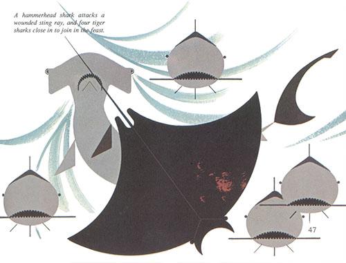 Animal Kingdom   Sharks   Charley Harper Prints   For Sale
