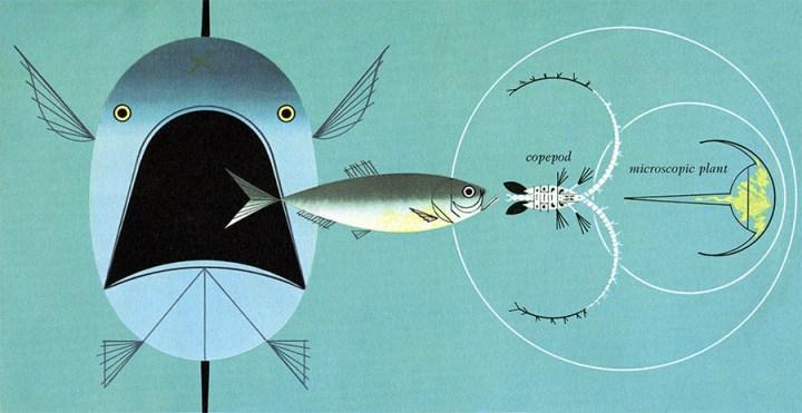 Golden Book of Biology | Harper & the Sea | Charley Harper Prints | For Sale