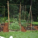 Bamboozling How To Build A Bamboo Trellis Let S Face The Music