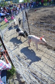 pig races 4 (1 of 1)